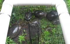 Turtles all the way down…by the greenhouse